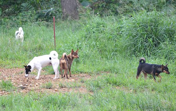 バンナ公園に野犬の群れ 保健所...