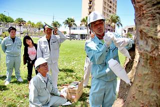 薬剤をデイゴの樹幹に注入する参加者ら=11日午前、浜崎緑地公園