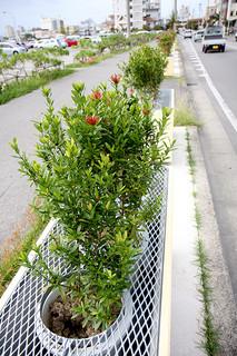 ミニサンダンカが盗まれた植栽プランター(手前の穴があいた箇所に植栽されていた)=27日午後、国道390号バイパス