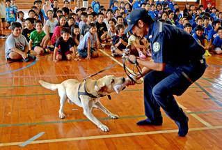 税関教室で訓練を披露する麻薬探知犬のボルト君と見入る八島小学校の児童ら=10日午後、同校体育館