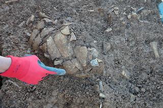 1万6000―1万8000年前の層から見つかった人の頭骨