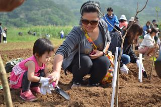 秋晴れの下、サガリバナの苗を植える親子=17日午前、平久保のサガリバナ群落