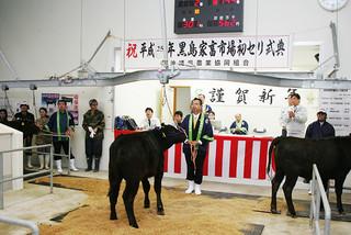 子牛価格が過去最高を記録した黒島家畜市場の2013年セリ=1月11日午前、初セリ