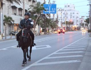 朝の散歩を楽しむ親盛弘さんと愛馬のアンジェラ=11月24日午前6時20分ごろ、琉球銀行八重山支店前の国道バイパス