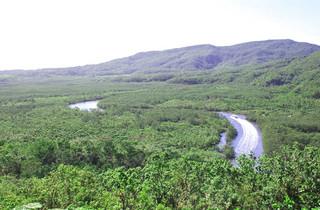 西表島を含む4島が「奄美・琉球」世界自然遺産暫定リストの候補地に選ばれた。=資料写真・2006年12月