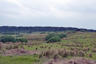 沿岸監視部隊の配備が予定されている与那国町の南牧場=2013年1月23日