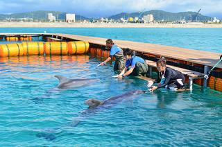 イルカのトレーニングを行うトレーナーたち=3日午前、新港地区石垣港人工ビーチ内プール