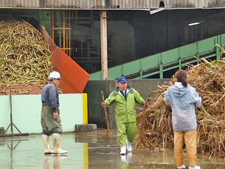 収穫作業の人員不足で操業に支障をきたしている与那国製糖工場=13日