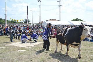 4年ぶりに復活した牛との綱引きなど多彩なイベントが行われた黒島牛まつり=23日午後、黒島多目的広場