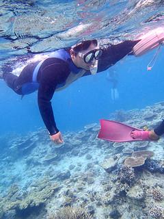 移設サンゴを観察する参加者ら=2月28日午前、石西礁湖(石垣港湾事務所提供)