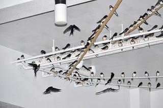 渡りの途中、石垣島に飛来し、所狭しと羽を休めるツバメ=6日午後7時ごろ、石垣市浜崎町の民家