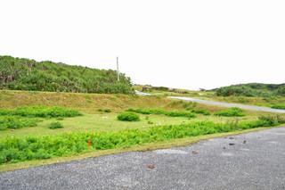 陸上自衛隊沿岸監視部隊の配備が計画されている与那国島の南牧場=2日