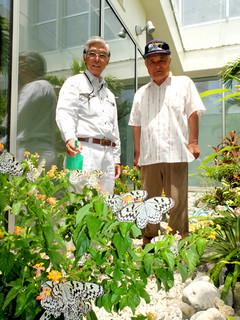 「光庭」でオオゴマダラやツマベニチョウの世話をする座喜味盛二さん(左)と宮田健司さん=16日正午すぎ、南ぬ島石垣空港
