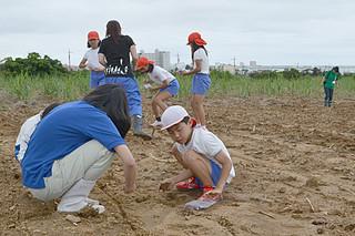 芝浦工大や八重農の生徒たちと一緒にロシアヒマワリの種を植える真喜良小の5年生たち=9日午後、石垣市新川の宮城康昌さんの畑