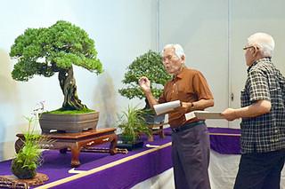 出展作品の枝ぶりなどをチェックした審査委員長の新城弘志氏(左)ら=9日午後、市民会館展示ホール