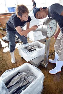 水揚げされたばかりのカツオを本島に出荷するため箱詰めする業者=17日午前、八重山漁協