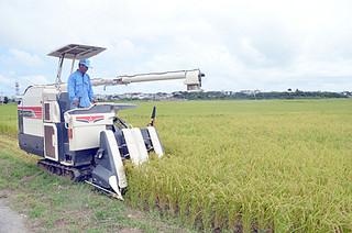 本年産1期米の収穫を行う山根政人さん=24日午後、石垣市新川平田原