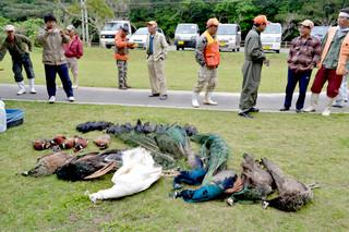 県猟友会八重山地区が駆除したクジャクやキジ、カラス=3月16日午前、市林業総合センター