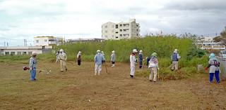 草刈り作業を行う石垣市シルバー人材センターの会員ら。2013年度は1億6000万円余を受注した(シルバー人材センター提供)