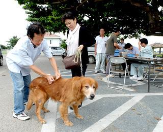 狂犬病予防注射を受ける飼い犬。短時間で受けることができる=3日午後2時すぎ、舟蔵公園