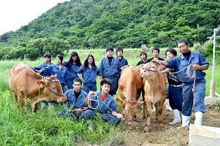 琉球大学農学部と連携し、褐毛和種の放牧肥育技術を実証する実験に参加している八重山農林高校畜産科の3年生たち=10日午後、同校牧場