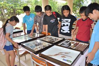 平真小学校のチャレンジ広場に八重山のチョウやガの標本約100種類が展示され、興味津々の様子で見入る児童ら=11日午前