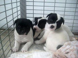 保健所前に捨てられていた3頭の子犬=10日午前、(八重山保健所提供)
