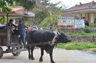 水牛営業所移転を求める看板の前を通る水牛車=1月20日。看板は26日にも撤去される見通しとなった