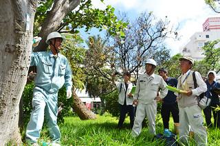 デイゴの樹幹に薬剤を注入する参加者ら=28日午後、石垣市役所中庭