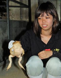 捕獲したオオヒキガエルをみせる生徒。あまりの大きさにびっくりしていた=29日午後8時20分ごろ、名蔵小中学校