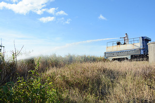 散水作業を行う10トントラック=24日午後、祖納周辺のサトウキビ畑