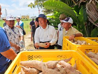 「沖夢紫」の生産現場を視察する読谷村の紅イモ生産農家ら=17日午後、旧石垣市給食センター北方の芋畑