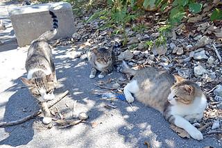 飼い主に捨てられ、南ぬ浜町に住み着いている猫たち=12日午前