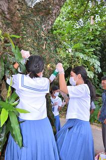 デイゴの樹幹に薬剤を注入する川平中の生徒ら=9月30日午後、同校