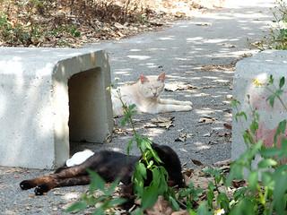 緑地公園内に生息する猫。中には避妊・去勢手術されていない猫も多数いるという=6日午後、南ぬ浜町