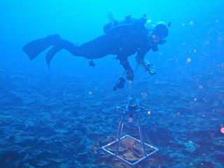 特殊な機材でサンゴを撮影するダイバー(八重山ダイビング協会提供)