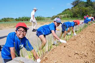 赤土等流出防止活動事業の一環で、グリーンベルトの植栽を体験した八島小の児童たち=24日午前、新川地区