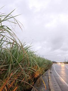 小雨傾向が続く中、八重山地方は27日夕方から厚い雲に覆われ、各地でまとまった雨が降った。伊原間では総雨量が105ミリに達した=27日午後5時55分ごろ、石垣市登野城
