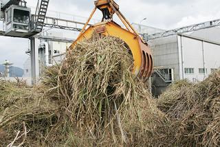 8カ月ぶりに工場に活気が戻った石垣島製糖。今期は7万5734㌧台の原料が予定されている。=17日午後、石糖原料ヤード