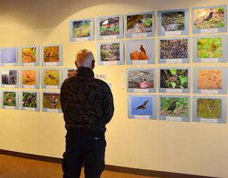 ルリカケスなど奄美の固有種なども紹介されている南西諸島の鳥200展=18日午後、市民会館展示ホール