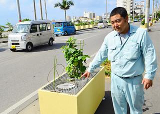 何者かが鉢植えのハイビスカスを持ち去った植栽コンテナと被害を指さす新垣能人さん=26日午後、国道390号バイパスの大浜信泉記念館前