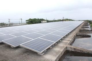 牛舎屋根に設置された太陽光パネル=30日午後、JAおきなわ八重山肥育センター