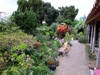緑に囲まれた大塚明さん宅の庭。約60種のハーブ「命草」が栽培されている=4日午前