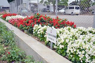 色とりどりの花を咲かせ、道行く人の目を楽しませている真栄里婦人会の花壇=7日午後、真栄里公民館