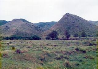 1989年の多良間田跡。畝が確認できる=石垣市市史編集課提供
