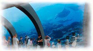 石垣市が3月までに水族館建設推進基本計画を策定した水族館の内観イメージ