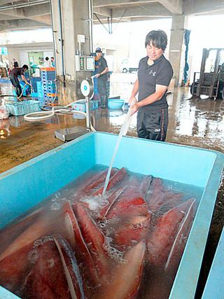 水揚げされたセーイカの保冷用タンクにスラリーアイスを入れる=19日午前、八重山漁協
