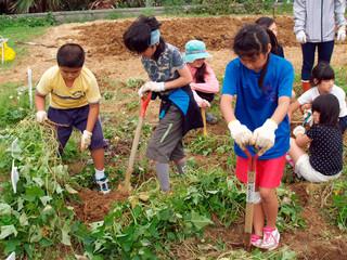 農園でサツマイモを植え付ける比川小学校の児童ら=23日、同校農園