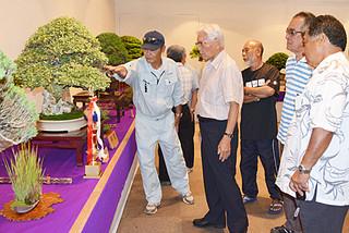 2日間の日程で開幕した第30回八重山盆栽展。出展作品に見入る関係者たち=9日午前、市民会館展示ホール