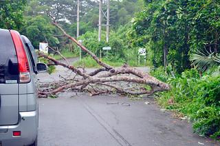 倒木で一時通行止めとなった万勢岳の林道=12日午前、石垣島天文台駐車場付近